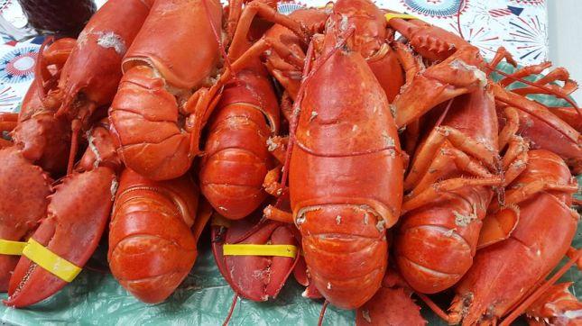 lobster-1662978__480
