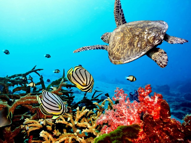 amazing-coral-reefs-12