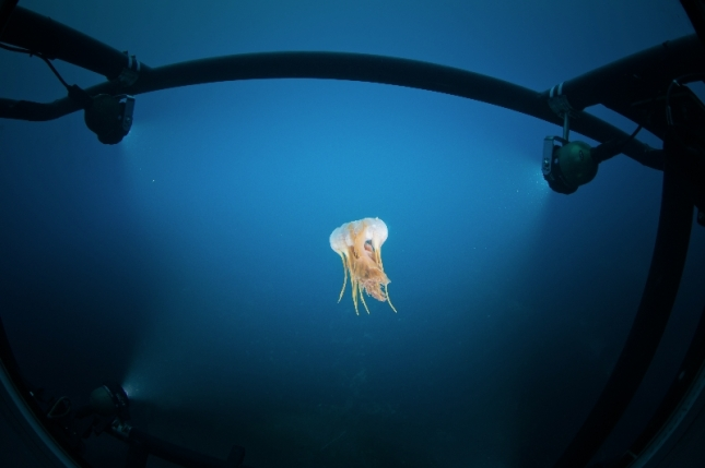 Caught in Triton's headlamps on the historic Antarctica expedition, this jellyfish made a dramatic photo. -Special Thanks to Henry Cookson Adventures- Photo: Andrew Peacock -