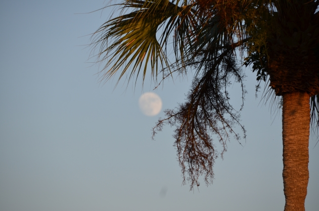moonrise-and-palm-tree
